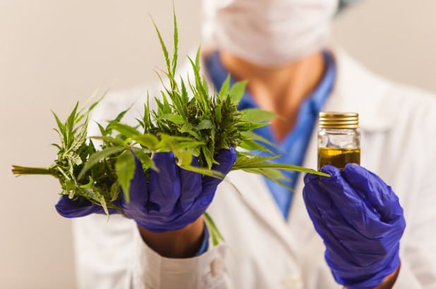 Doctor Holding Cannabis Leaves and Tincture